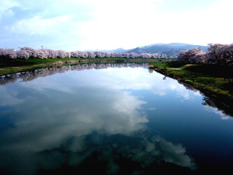 Sakura_001[2]