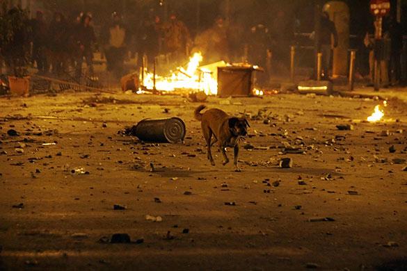 8-December-2008-A-stray-d-019